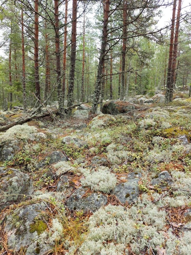 Sammalta metsässä.